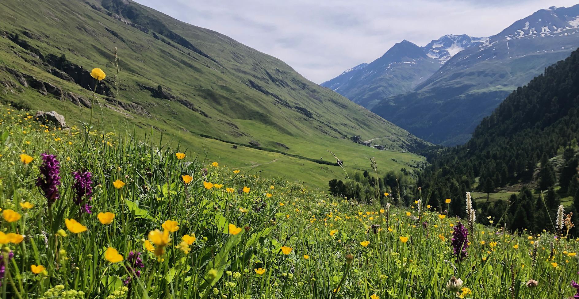 Na tyrolské louce